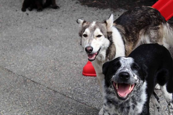 Dog Sitting - 2 dogs smiling