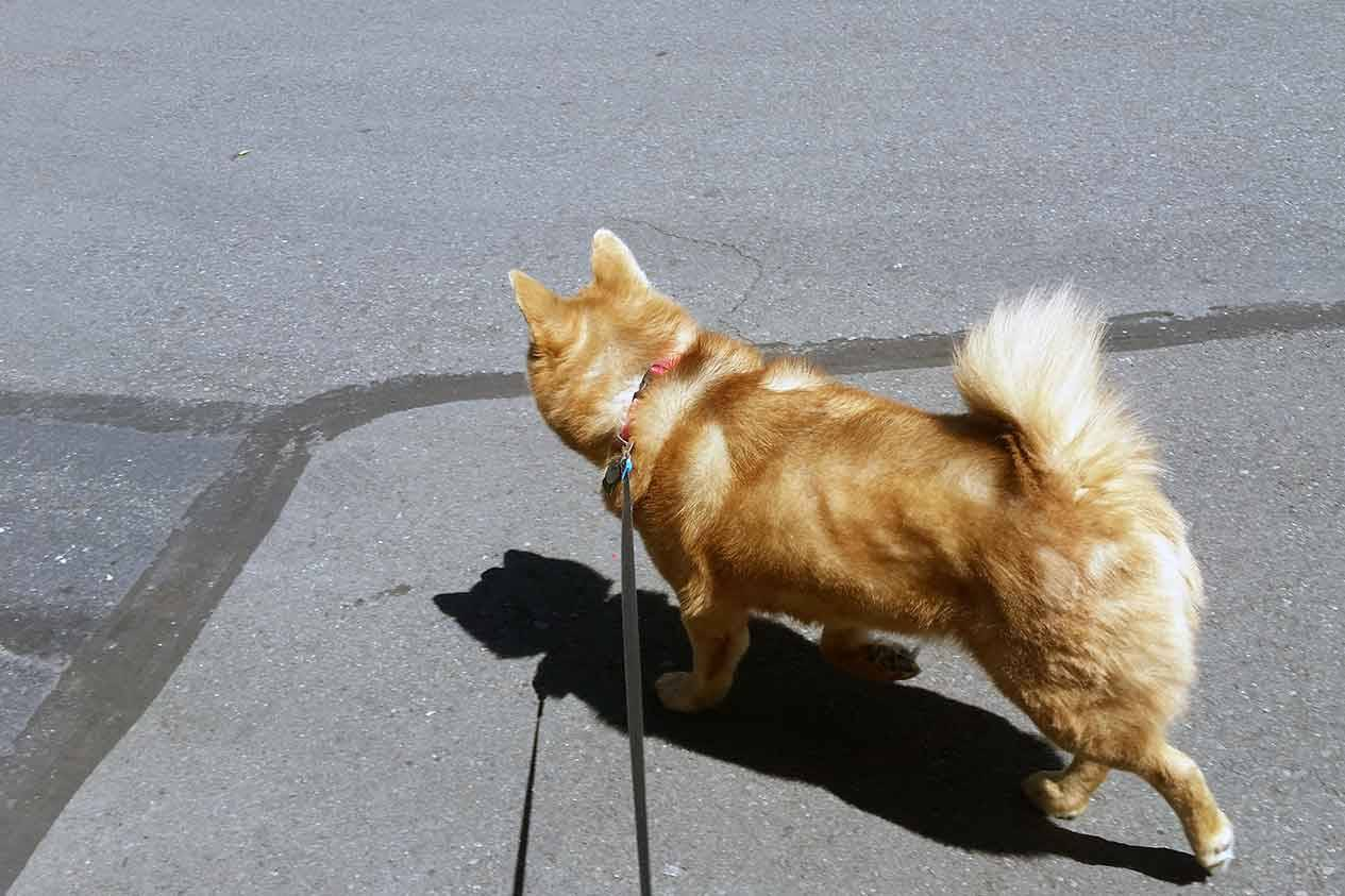 Potty Breaks - Dog walking on a leash